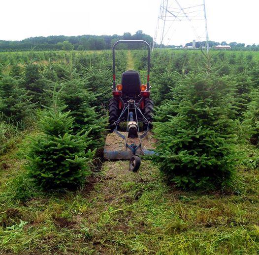 Mowing Fraser Fir Tree Field