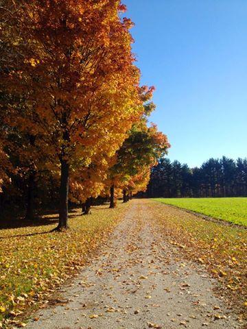 Maple Trees at Hensler's