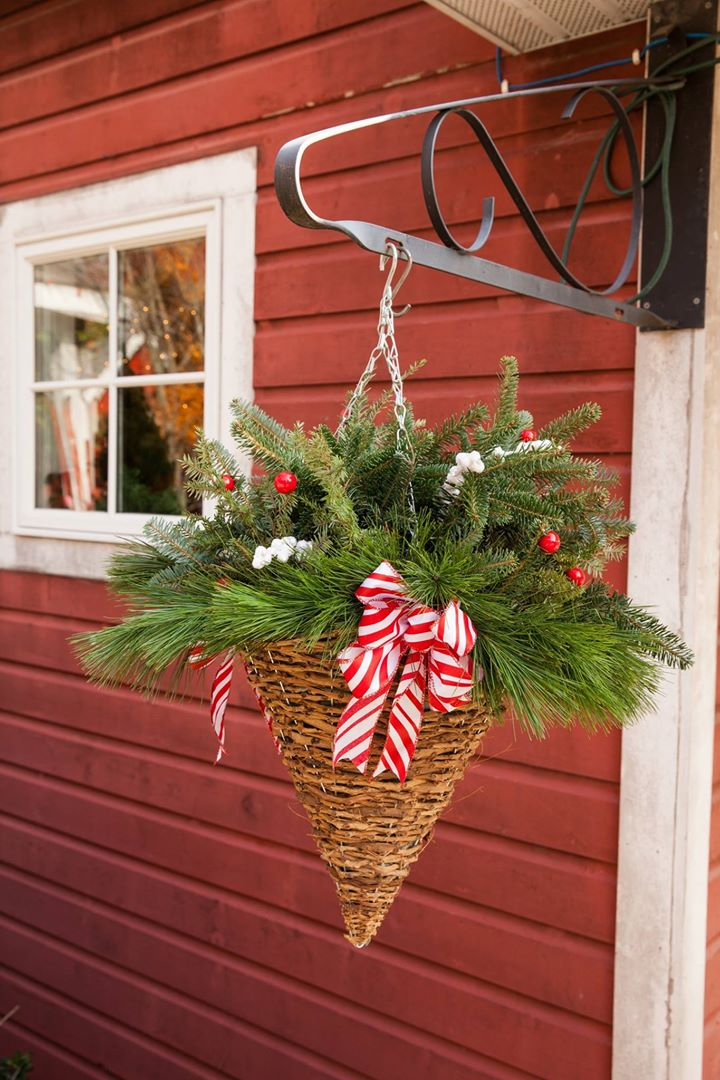 handmade hanging basket of fresh christmas greenery - Fresh Christmas Greenery