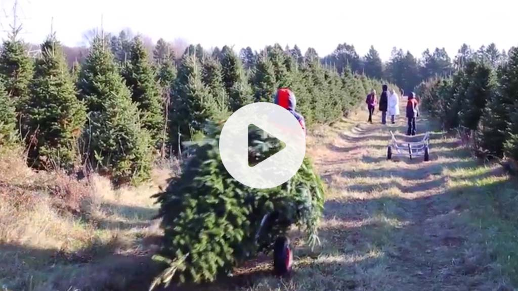 Video family cutting down Fraser Fir at a Christmas tree farm