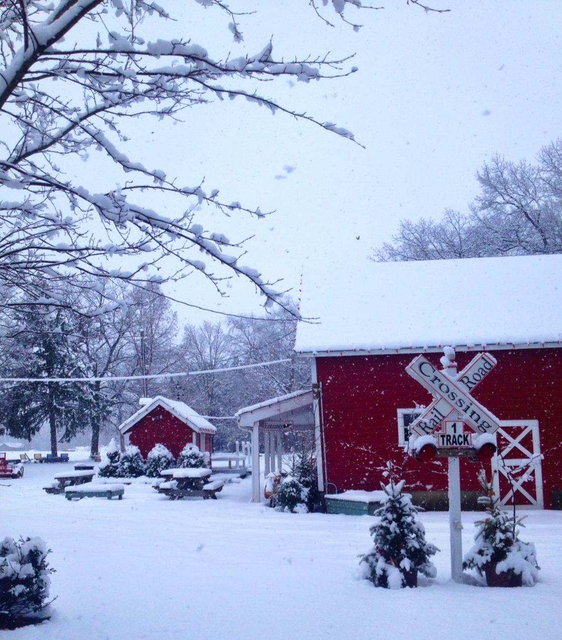 Snow Covered Christmas Tree Farm