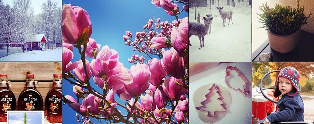 Hensler Nursery on Instagram