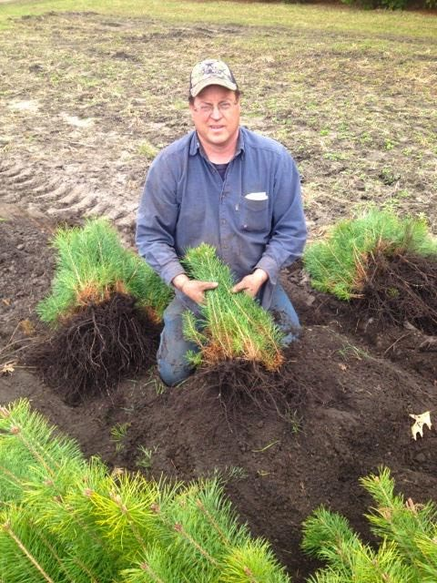 Forester Scott Heeren and Scotch Pine Seedlings