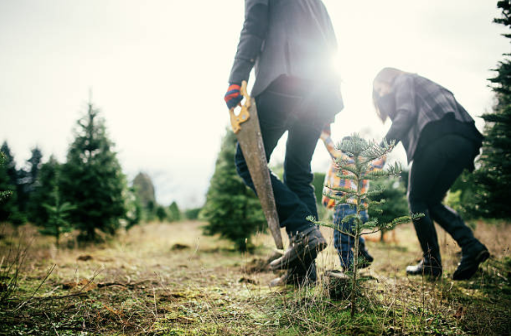 Cut your own Christmas Tree at Hensler's